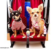 Dogs at the movies by Sherial Vaughn