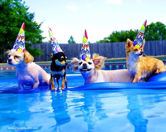 Sherial Vaughn › Portfolio › Pool Birthday Party Dogs