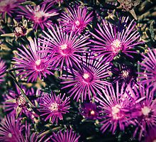 Flowers by Silvia Ganora