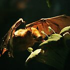 Bat by James  Birkbeck Animals