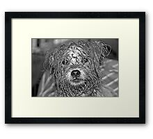 CHASING FROGS... Framed Print