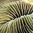 Fungia by gardenofbeeden