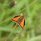 Small skipper by John Keates