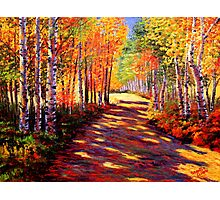 Aspen Light on the Road Photographic Print