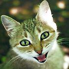 smile of cat  by Iuliia Dumnova