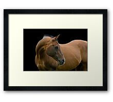 Stallion portrait Framed Print