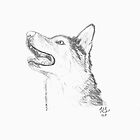 Siberian Husky Head by Thesilentone