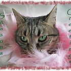Cat Xmas greeting by Forfarlass