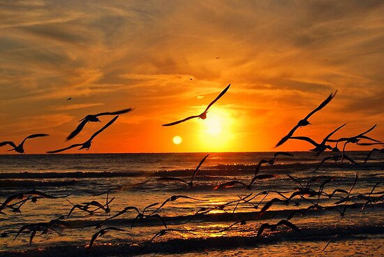 Seagulls at Sunset by Colleen Friedman