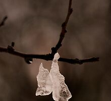Phenomenology of a drop of water (in a cold cold winter morning) by coveredinice