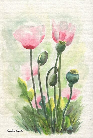 Pink Poppy by Caroline  Lembke