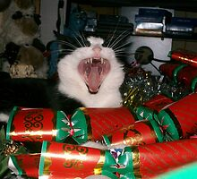 Christmas Cracker by Ladymoose