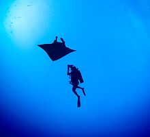Manta World by Richard  Barnden