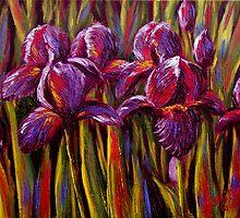 Irises by sesillie