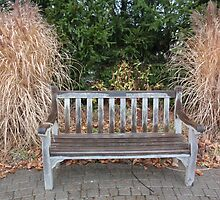 serenity bench by DarylE