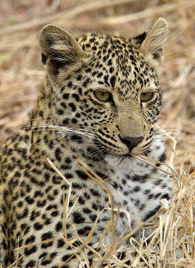 Vegetarian Leopard?  by Michael  Moss