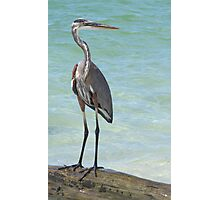 Heron at Stump Pass (Florida, USA) Photographic Print