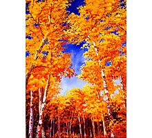 Sky View From the Aspen Forest Photographic Print