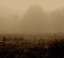 A foggy morning in the country by John E. McAlear