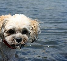 Muffy by the Water! by caz60B