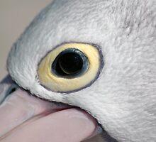 Pelican Eye - NSW by CasPhotography