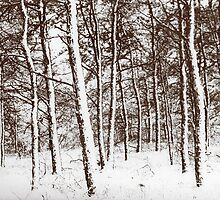 Trees in the snow by andytechie