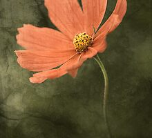 Wall Flower by Kelly Cavanaugh