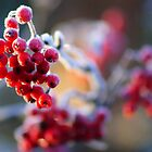 Winter Berry by FotogalleryYury