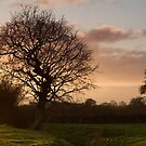 Hamp Brook Tree Silhouette by kernuak