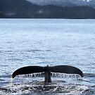 Deep Dive by Gina Ruttle  (Whalegeek)