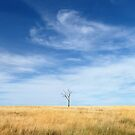 A Lone Tree by Rod Kashubin
