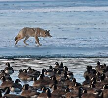 Stalking On The Ice by Jay Ryser