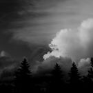 Black and White Sunset  by Nicole DeFord