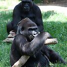 Gorilla's at Melbourne Zoo by GigaczArt