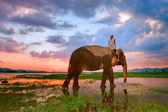 Elephant sunset, Vietnam by Geraldine Lefoe