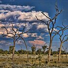 Gum trees at Uluru ( Ayres Rock) Central Australia by Ausgirl60