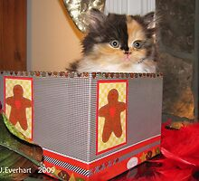 Cuteness in A Gingerbread Box by Julie Everhart