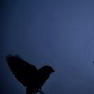 Blue Shadow Bird II by Michelle BarlondSmith