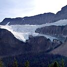 Crowfoot Glacier by George Cousins