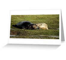 Guess What Mum - Watercolor Grey Seal With Pup Greeting Card