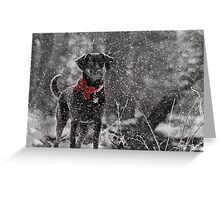 Dashing Through the Snow... Greeting Card