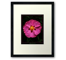 Perfectly Pink and Proud Framed Print