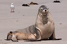 Sealions 6 by Werner Padarin