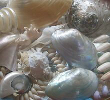 PAUA, SPINDLE , & PEARLY SHELLS by lozzy65