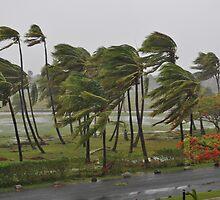 Cyclone Mick in Fiji  by Luke Donegan