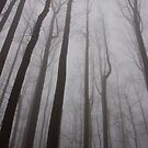 leafless forest by dc witmer