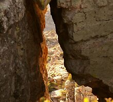 Crevice View by Judi FitzPatrick