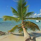 Fallen Palm by Robert Abraham