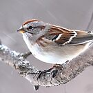American Tree Sparrow by Jim Cumming
