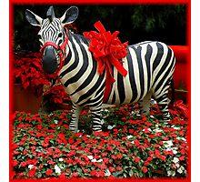 The Zebra's Mockery Photographic Print